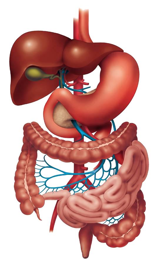 Gastro Surgeon Surat Gastrosurgeon Surat Gastrointestinal Surgeon